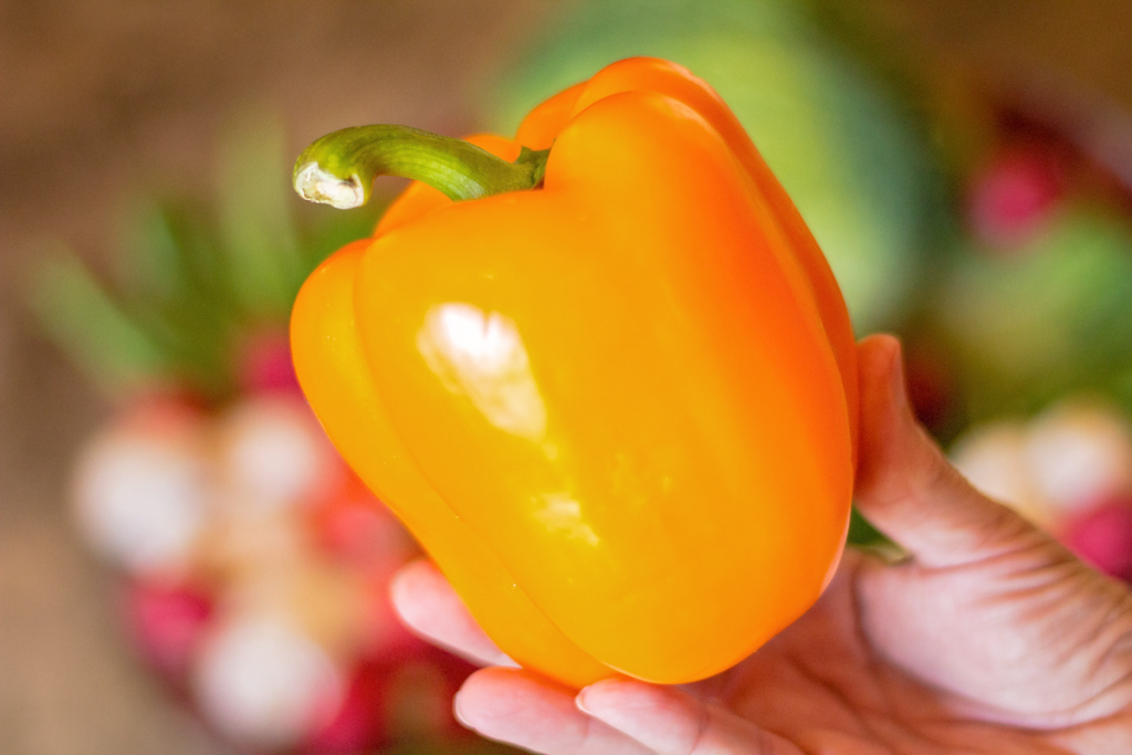 Fresh From Florida Bell Pepper